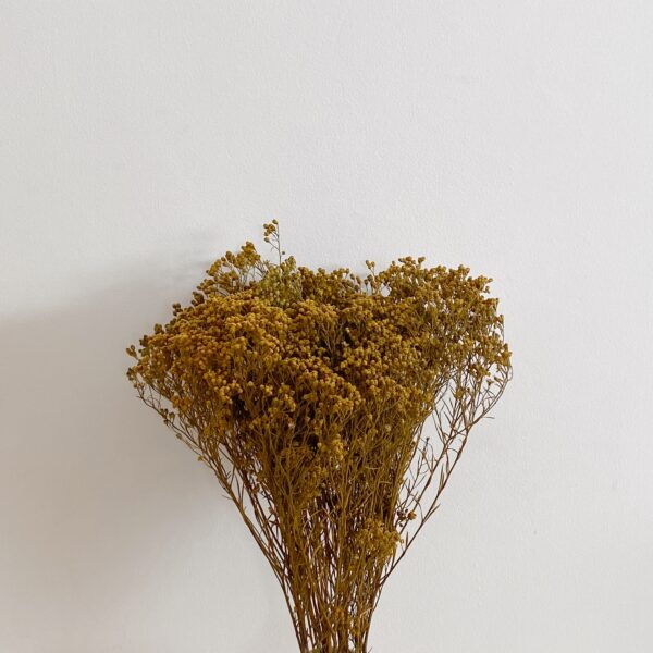 ramo broom seco mostaza